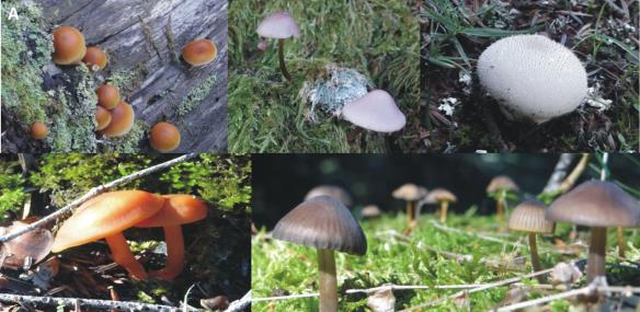 Fig. 4 – Representative fungal species: A. Basidiomycetes in their natural environment (photos from Ms. M. Ntertili and Dr. V.N. Kouvelis)
